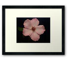 Divine Pink Framed Print