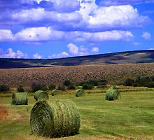 Hay Bales by Snail-Trail