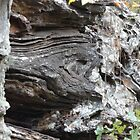 Fossilized trees in the rocks of Petit Jean State Park, Arkansas by phillipcmiller