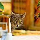 Lunch Companion by Barbara  Brown