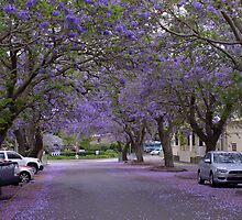 Jacaranda Time by Gabrielle  Lees