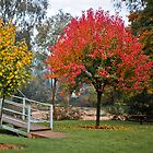 Autumn Colours by DavidsArt