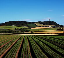 Scrabo In View by Wrayzo