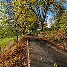 Autumn Country Road by Adrian Evans