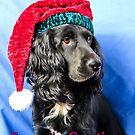 Season's greetings dog by JEZ22