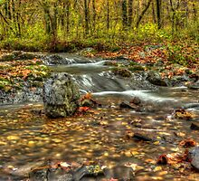 Fall All Around by Cynthia Broomfield