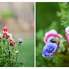 June Diptych 2014 by Lisa  Epp