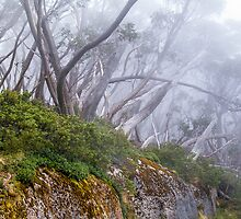 Snow Gums in the Cloud. by Bette Devine