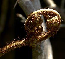 Koru..........A new beginning.......! by Roy  Massicks