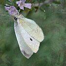 Butterfly dreaming by Julie Sherlock