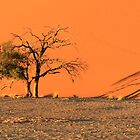 Dune 45 Shadows by Jennifer Sumpton