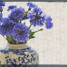 Cornflowers by Julie Sherlock