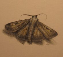 The usual suspects - moth 2 by Nestor