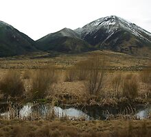Tranz Alpine Train Journey 2 by Alison Murphy