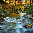 Shimna Autumn Light by Derek Smyth