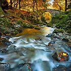 Shimna Autumn Light by Derek Smyth