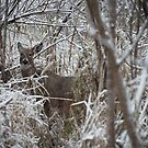 First Snow Doe by Thomas Murphy