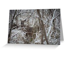 First Snow Doe Greeting Card