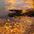 Fallen log in fall pond by dfrahm