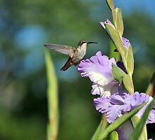 Hummingbird in Lavender  by Silverroses282