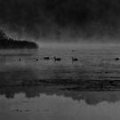 Foggy Morning At The Lake by Thomas Young