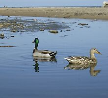 Pair of Ducks by adrianwale