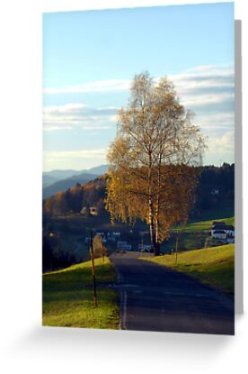 Tree, road and indian summer evening II   landscape photography by Patrick Jobst