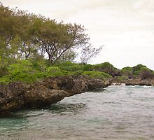 Tonga - Sea and land scape by Derek  Rogers