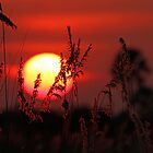 Sunrise in the Delta by jozi1