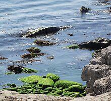 Green Rocks by TheShutterbugsG