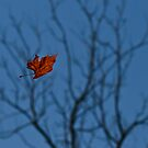 The Last Leaf Fell by photodug