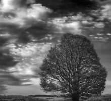 A Tree, All Alone by Tobias King