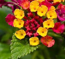 Red and Yellow Tiny Flowers by Crystal Wightman