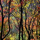Autumn Colors by David Schroeder