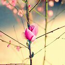 Textured Bloom by ea-photos