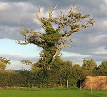 Good Old Somerset Tree by Alexandra Lavizzari