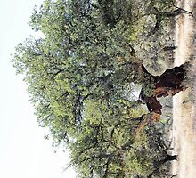 Cork Oak Tree by Wendy  Rauw