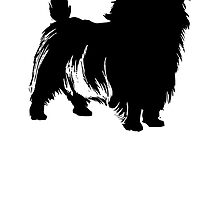 Cairn Terrier by kwg2200
