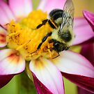 Bumblebee 2 by Sara Bawtinheimer