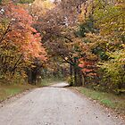 Road in Shawnee Forest by Sandy Keeton