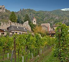 Durnstein Vineyard by phil decocco