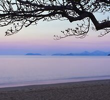 Purple Palm Cove by Martin Canning