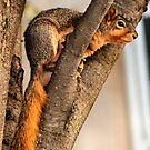 Method Squirrel...become the tree.... by Keala