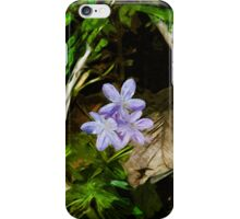 Spring Beauty a Wildflower 3 Abstract Impressionism iPhone Case/Skin