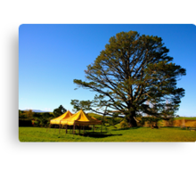 Party tree at Hobbiton - New Zealand Canvas Print