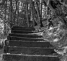 STAIRWAY IN THE WOODS by MIKESCOTT