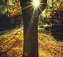 The Last Weekend of Calming Yellow Autumn II by va103