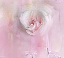 Weeping Rose by Anivad - Davina Nicholas