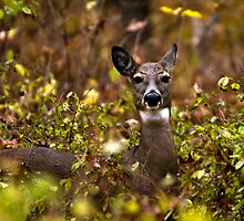 Deer in Autumn by Cale Best