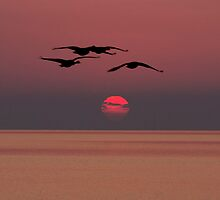 Geese at Sunrise  by Cale Best